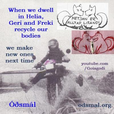 When we dwell in Helia, Geri and Freki recycle our body